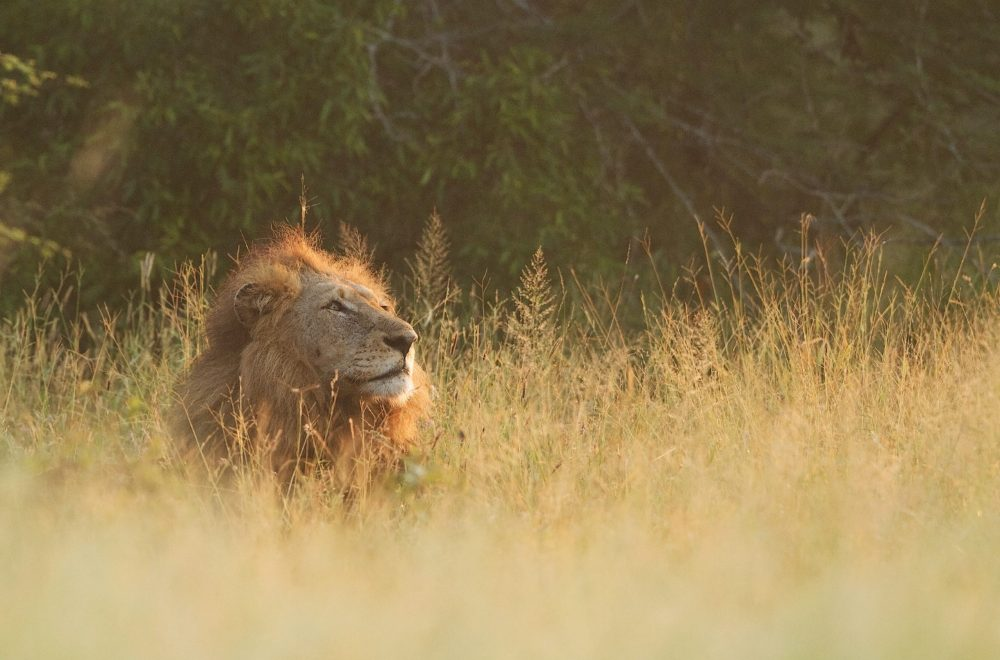 The Land of the Big Five